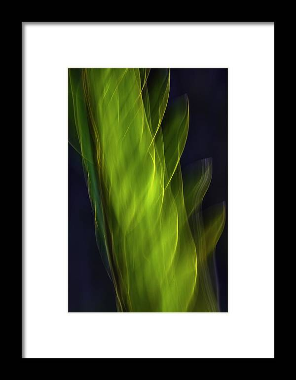 Photo Impressionism Framed Print featuring the photograph Plant Abstract by Antonio Oquias