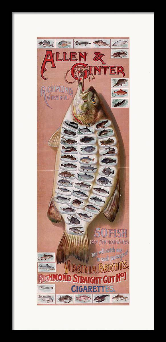 Fish Framed Print featuring the digital art 50 Fish From American Waters by Georgia Fowler