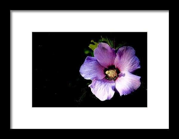 Flowers Framed Print featuring the photograph Flower by Tinjoe Mbugus