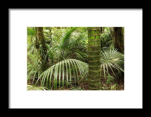 Forest Framed Print featuring the photograph Jungle by Les Cunliffe