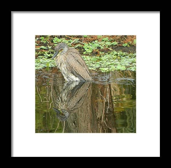 Florida Birds Giclee Framed On Paper Poster Prints In Mixed Medium Framed Print featuring the painting Florida Birds by Gunter Hortz