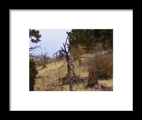 Trees Framed Print featuring the photograph Montana Landscape by Yvette Pichette