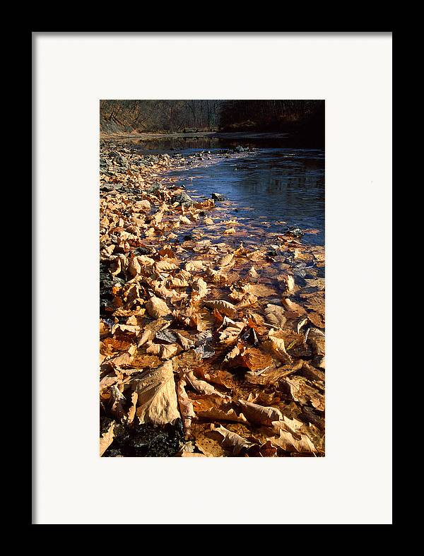 Autumn; Bank; Fall; Flora; Leaves; Nature; Nobody; Outdoors; Outside; Plant World; Plants; Seasons; Taiga; Water Framed Print featuring the photograph Ussurian Taiga Autumn by Anonymous