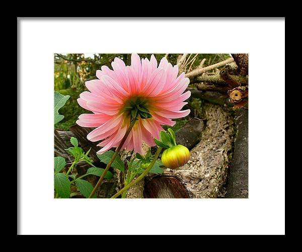 Flower Framed Print featuring the photograph 678. by Pavel Jankasek