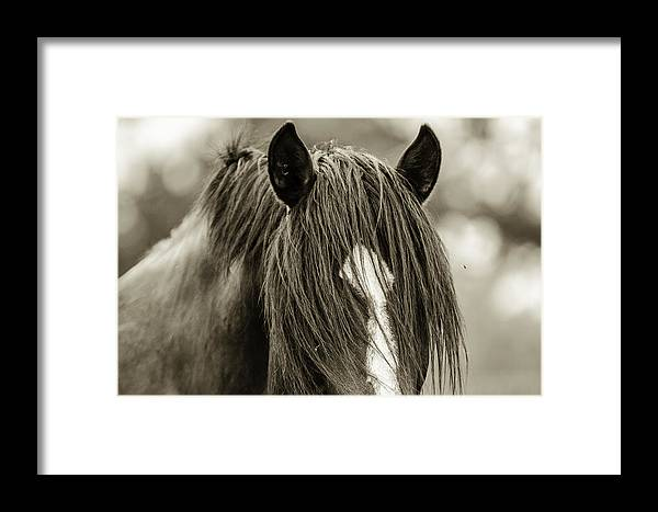Mustang Photographs Framed Print featuring the photograph Amante by Meg Frederick