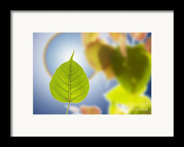 Autumn Framed Print featuring the mixed media Pho Or Bodhi by Atiketta Sangasaeng