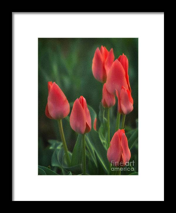 Red Tulips Framed Print featuring the photograph 7reds by Robert Marleau