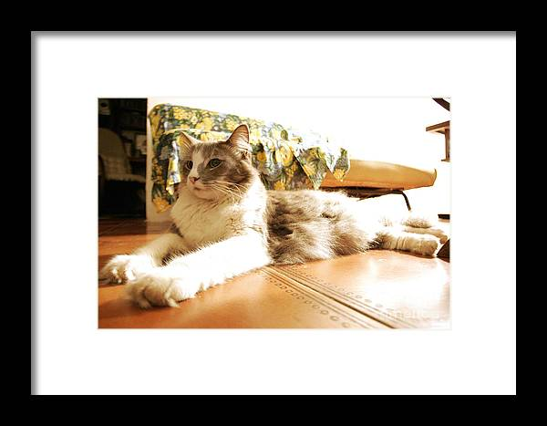 Cats Framed Print featuring the pyrography Cats by Marcelo Alves