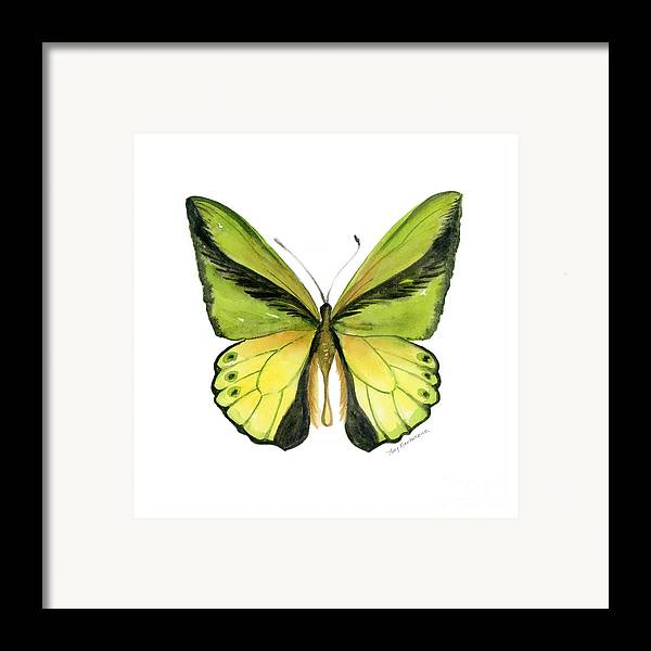 Goliath Butterfly Framed Print featuring the painting 8 Goliath Birdwing Butterfly by Amy Kirkpatrick