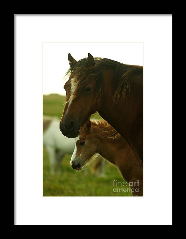 Horse Framed Print featuring the photograph Horses by Angel Ciesniarska