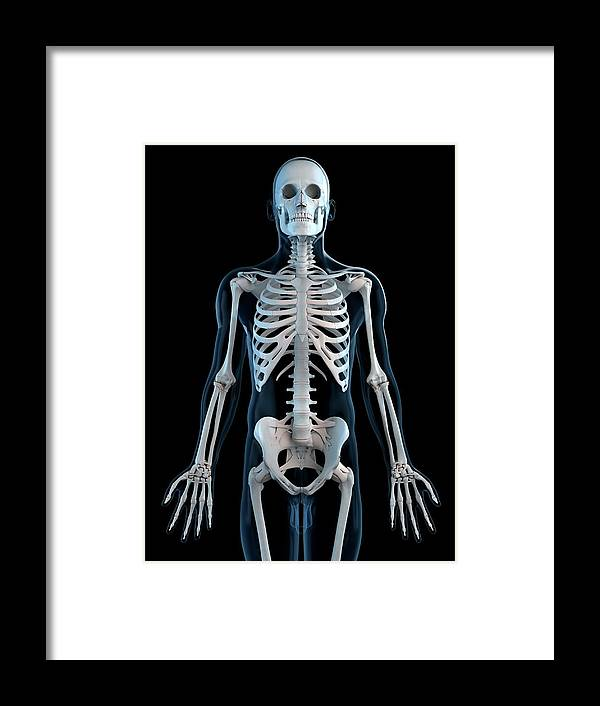 Physiology Framed Print featuring the digital art Human Skeleton, Artwork by Sciepro