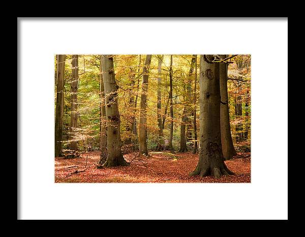 Landscape Framed Print featuring the photograph Vibrant Autumn Fall Forest Landscape Image by Matthew Gibson