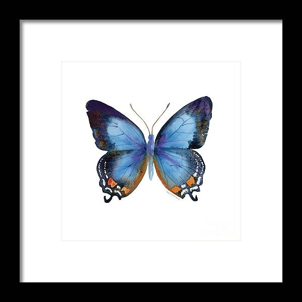 Imperial Blue Butterfly Framed Print featuring the painting 80 Imperial Blue Butterfly by Amy Kirkpatrick
