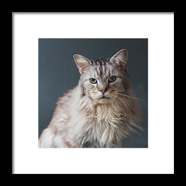 Pets Framed Print featuring the photograph Fortunate Tails by Matt Porteous