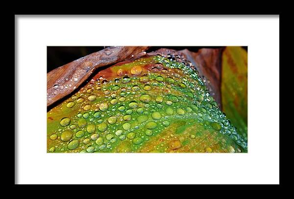 Macro; Raindrops; Wet; Warm; Water; Orange; Red; Stripes; Flower; Garden; Summer; Plant; Green; Lily; Background; Decorative Framed Print featuring the photograph Raindrops On Lily Leaf by Werner Lehmann