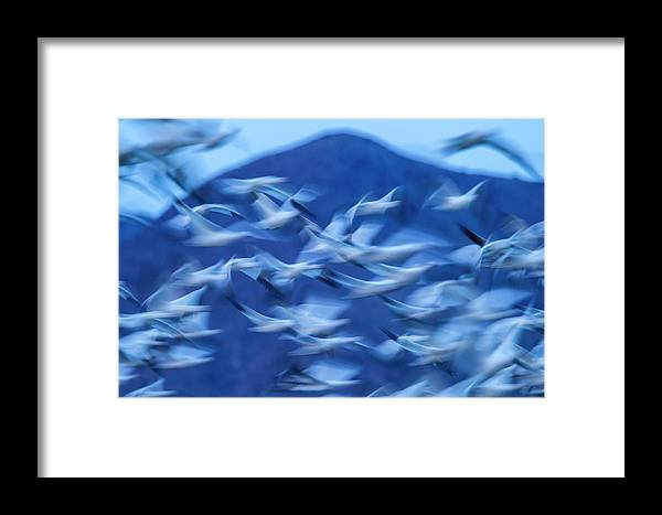 Abstract Framed Print featuring the photograph Usa, New Mexico, Bosque Del Apache by Jaynes Gallery
