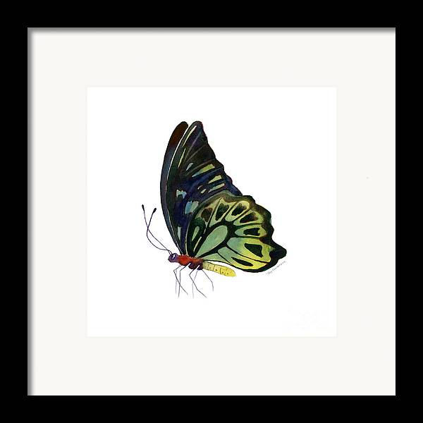 Kuranda Butterfly Framed Print featuring the painting 97 Perched Kuranda Butterfly by Amy Kirkpatrick