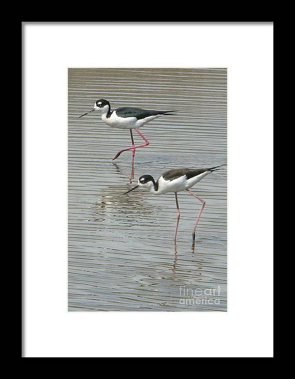 Stilt Framed Print featuring the photograph A Bit Stilted by Frank Townsley