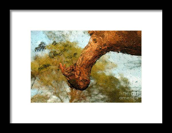 Trees Framed Print featuring the photograph A Branch by Morris Keyonzo