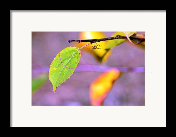 Leafs Framed Print featuring the photograph A Branch With Leaves by Tommytechno Sweden
