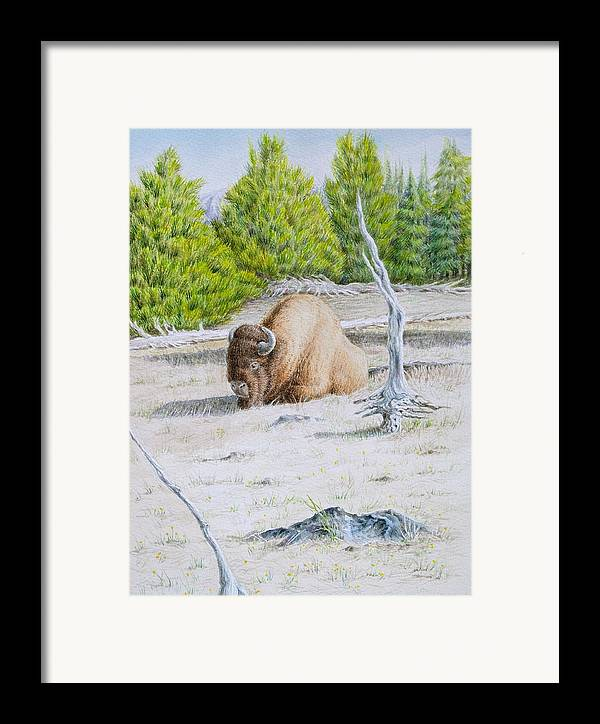 Buffalo Framed Print featuring the painting A Buffalo Sits In Yellowstone by Michele Myers