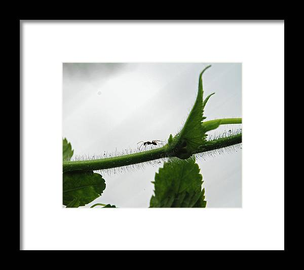 Insect Framed Print featuring the photograph A Bugs Life by Gopan G Nair