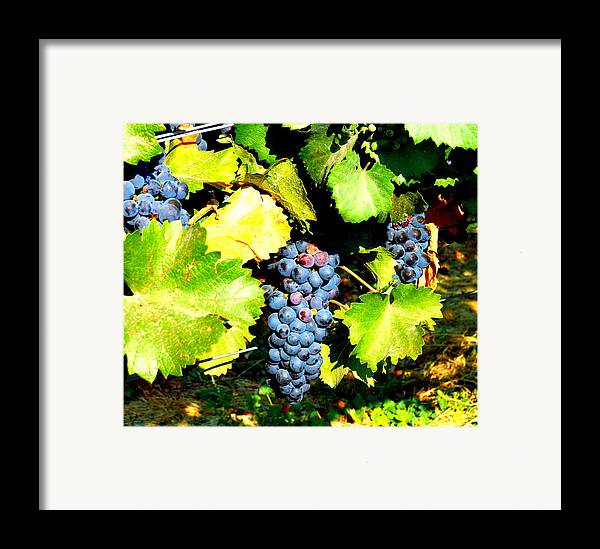 Grapes Framed Print featuring the photograph A Bunch Of Grapes by Kay Gilley