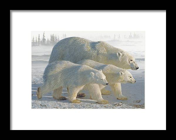 Polar Bear Framed Print featuring the drawing A Chill Wind by Brent Ander
