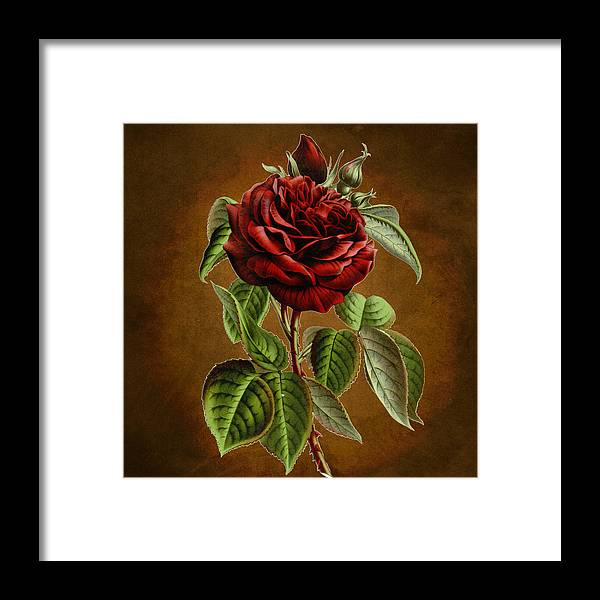 Abstract Framed Print featuring the photograph A Chocolate Beauty by Sheila Savage