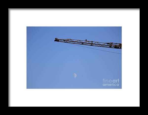 Crane Framed Print featuring the photograph A Crane With Crows by Four Hands Art