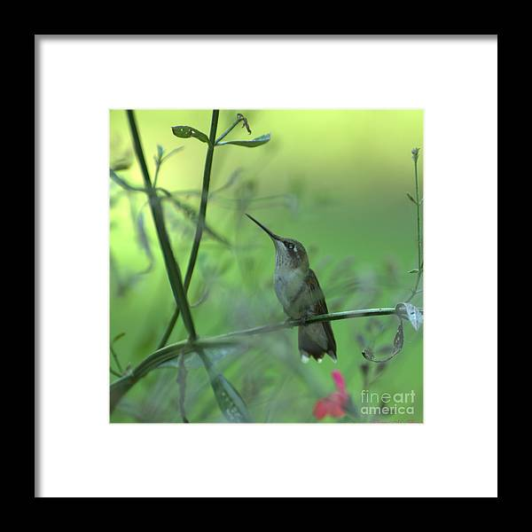 Bird Framed Print featuring the photograph A Dreamer by Donna Brown