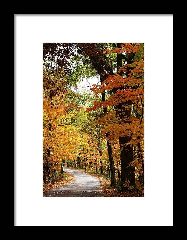 Woodland Framed Print featuring the photograph A Drive Through The Woods by Bruce Bley