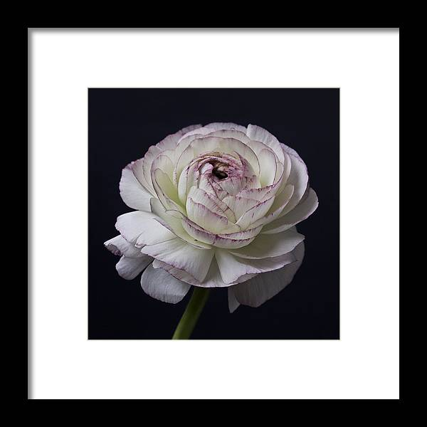 Black And White Flowers Art Work Photography Framed Print By Artecco