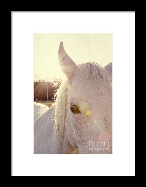 Animal Framed Print featuring the photograph A Horse's Eyes by Erin Johnson