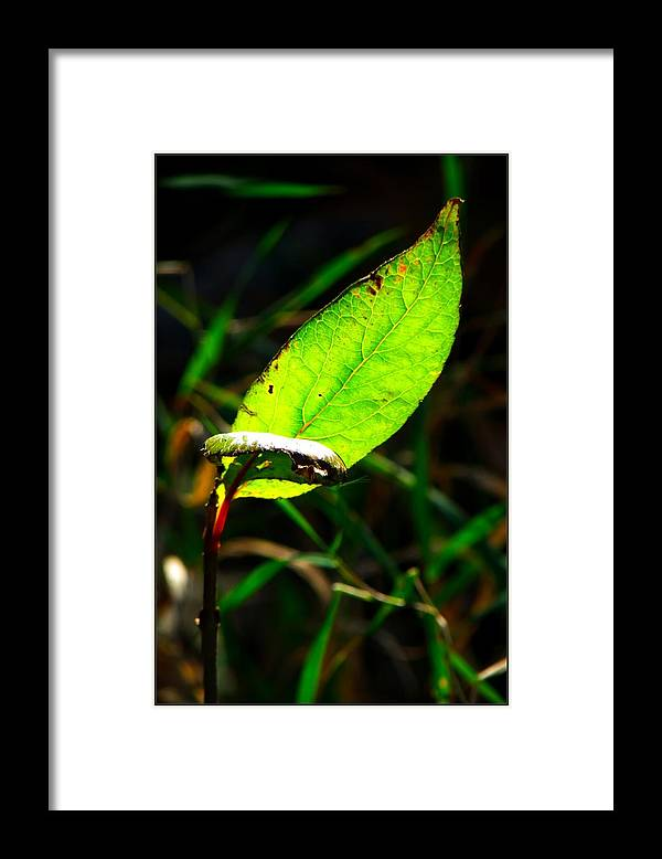 Photo Framed Print featuring the photograph A Leaf... by Tim Fillingim