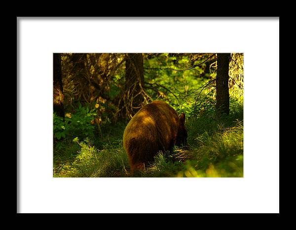 Bear Framed Print featuring the photograph A Little Brown Bear by Jeff Swan