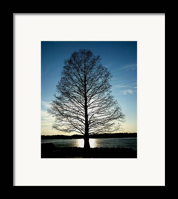 Tree Framed Print featuring the photograph A Lonely Tree by Lucy D