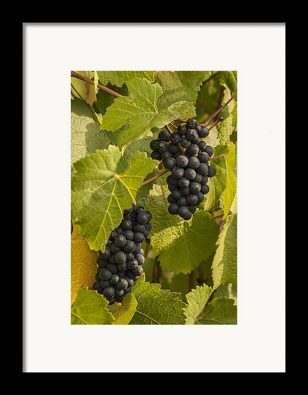 Crop Framed Print featuring the photograph A Pair Of Clusters by Jean Noren