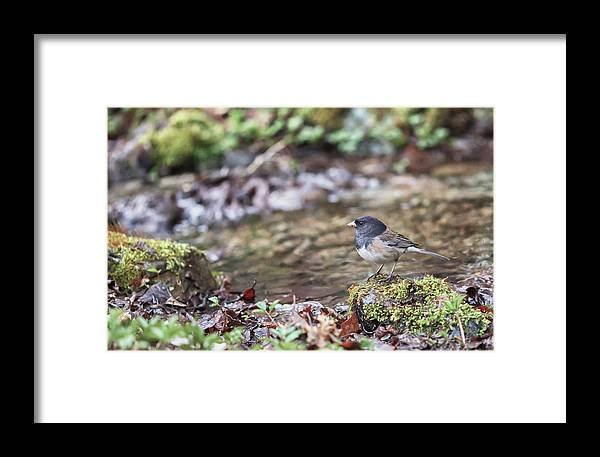 Bird Framed Print featuring the photograph A Simple Drink by Aaron Aldrich