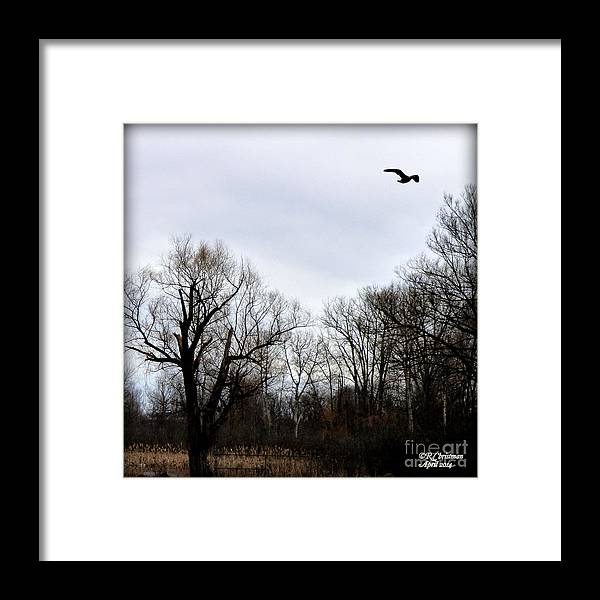 Landscape Framed Print featuring the photograph A Single Soul by Rennae Christman