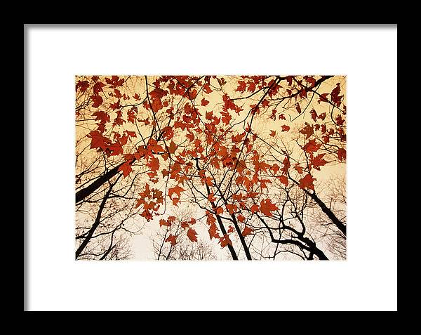 No People Framed Print featuring the photograph A Skyward View Of The Bare Branches by Raymond Gehman
