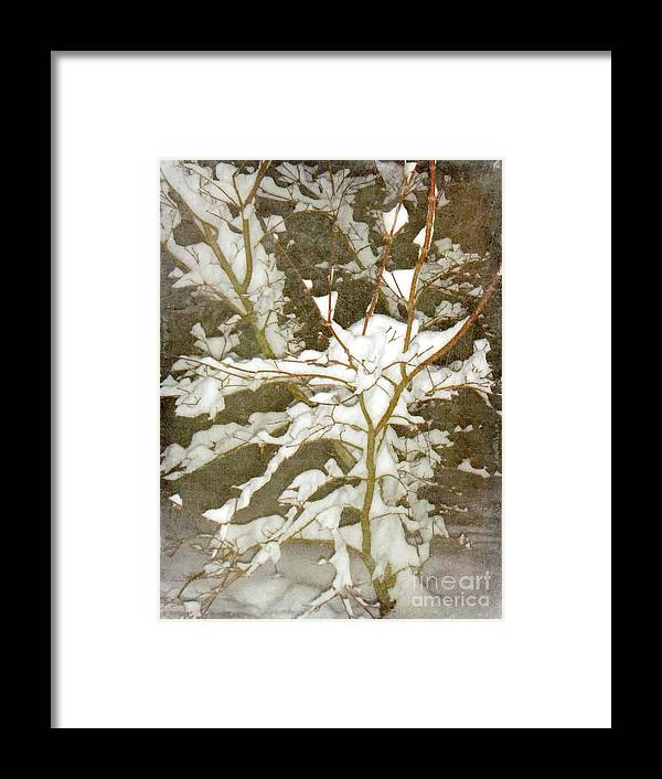 Snow Framed Print featuring the photograph A Snowy Tree by Alys Caviness-Gober