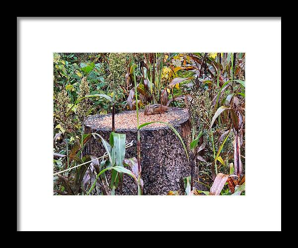 Phil Framed Print featuring the photograph A Special Kind Of Cute by Phil Penne