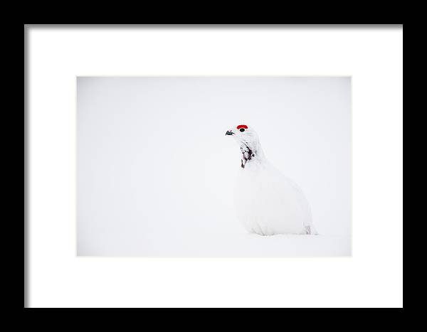 Adult Framed Print featuring the photograph A Splash Of Red On White by Tim Grams