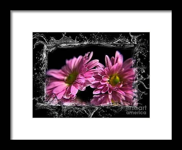 Flowers Framed Print featuring the photograph A Splash On The Flowers. by Dipali S