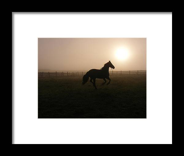 Horse Framed Print featuring the photograph A Sunrise Gallop by Laura Gillmer