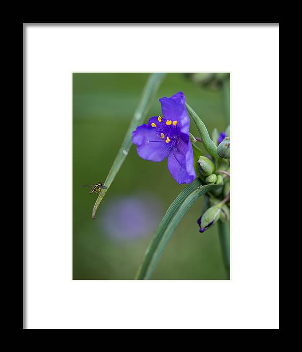 A Tiny Visitor Framed Print featuring the photograph A Tiny Visitor by Dale Kincaid