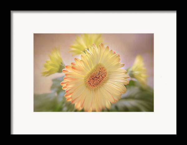 Flowers Canvas Framed Print featuring the photograph A Touch Of Sunshine by Fiona Messenger