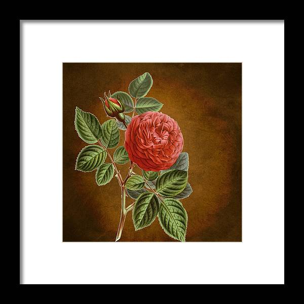 Abstract Framed Print featuring the digital art A Vintage Rose Romance L by Sheila Savage