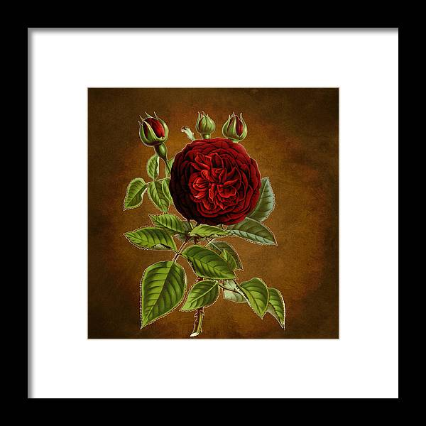Abstract Framed Print featuring the digital art A Vintage Rose Wonder by Sheila Savage